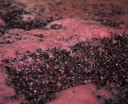 yeasts in wine